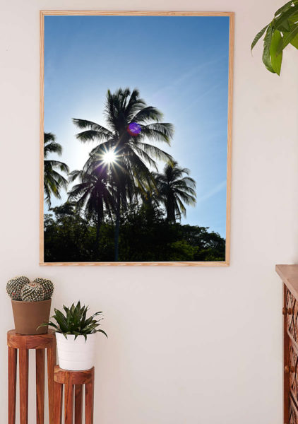 Palmtree sun star photo by Samba to the Sea.